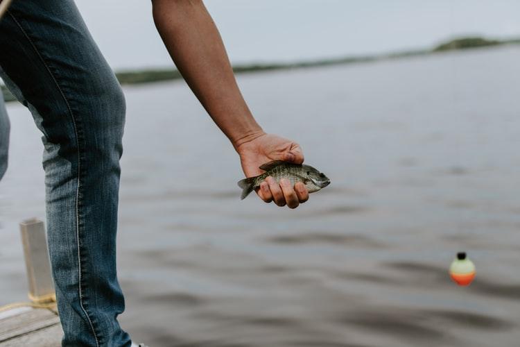 Melepas ikan pancingan ke air